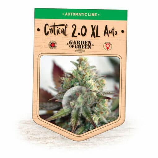 Critical 2.0 XL Auto Bulk   Buy Cannabis Seeds in Bulk   Garden of Green
