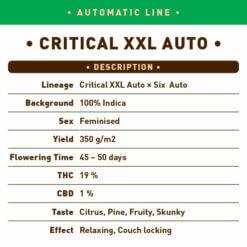 Critical XXL Auto
