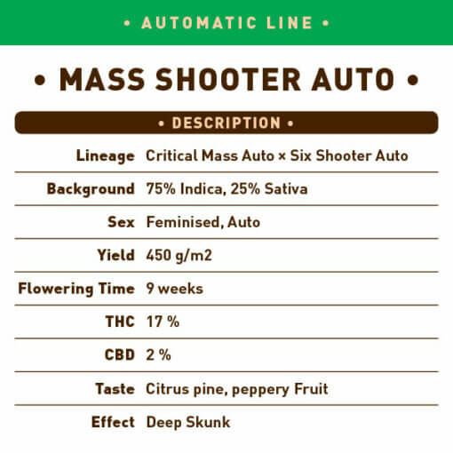 Mass Shooter Auto