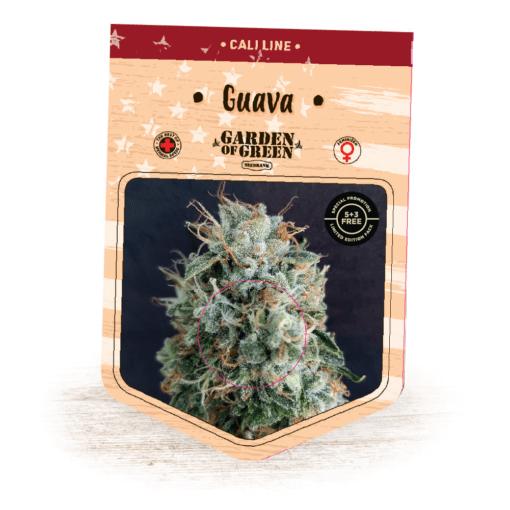 Guava Kush - Guava X OG Kush   Cali Line   California Strains   Cannabis Seeds   Garden of Green