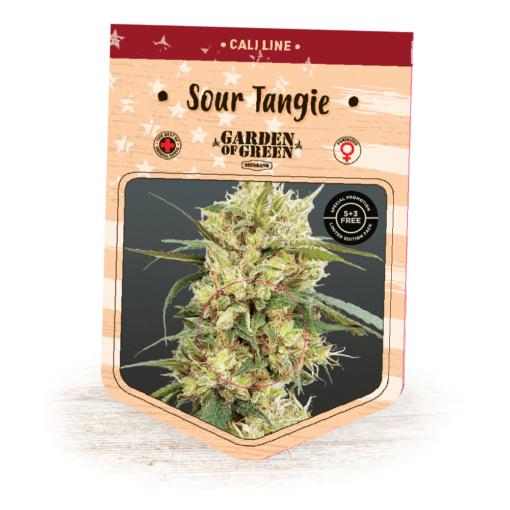 Sour Tangie - Sour Diesel x Tangie - Cannabis Seeds - Garden of Green