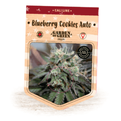 Blueberry Cookies Auto - Buy Cannabis Seeds - Cali Line - Garden of Green