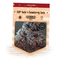 GDP X Gumberry Auto