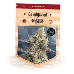 Candyland - Granddaddy Purple x Platinum Cookies - Indoor and Outdoor Cannabis Seeds - Garden of Green