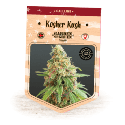 Kosher Kush | Kosher Kush x OG Kush | California Strains | Cannabis Seeds | Garden of Green
