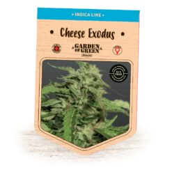 Cheese Exodus - Garden of Green - Cannabis Seeds - Cali