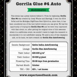 GorrillaGlue4 Auto back 1