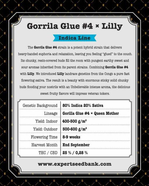 GorrillaGlue4 Lilly back 1