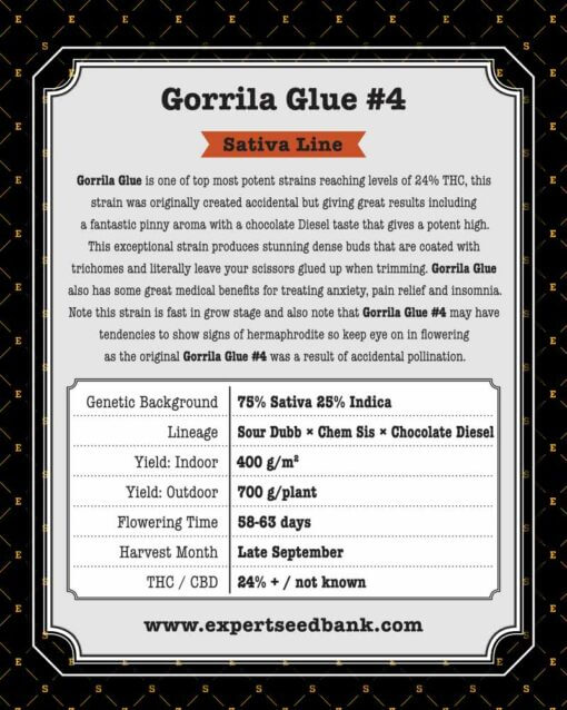 GorrillaGlue4 back 1